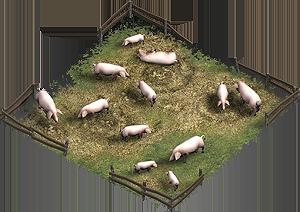 Das Feld der Schweinezucht